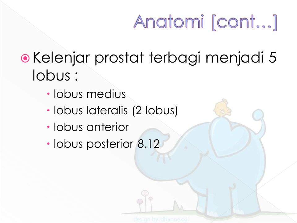 Anatomi [cont…] Kelenjar prostat terbagi menjadi 5 lobus :